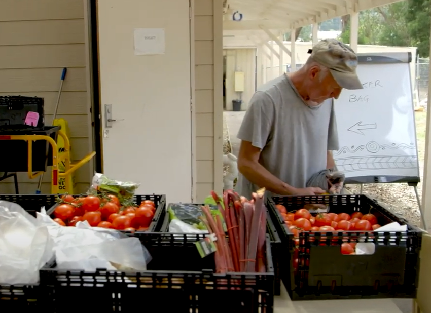 Volunteer at the food bank with produce